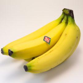 Pilz gefährdet Bananenernten weltweit