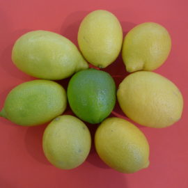 Über die Reifefarbe von Zitrusfrüchten