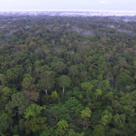 Paten für den Regenwald in Amazonien gesucht
